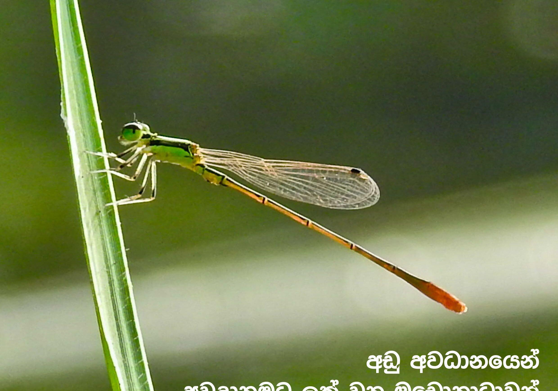 5.sanrakshana vol 5-4