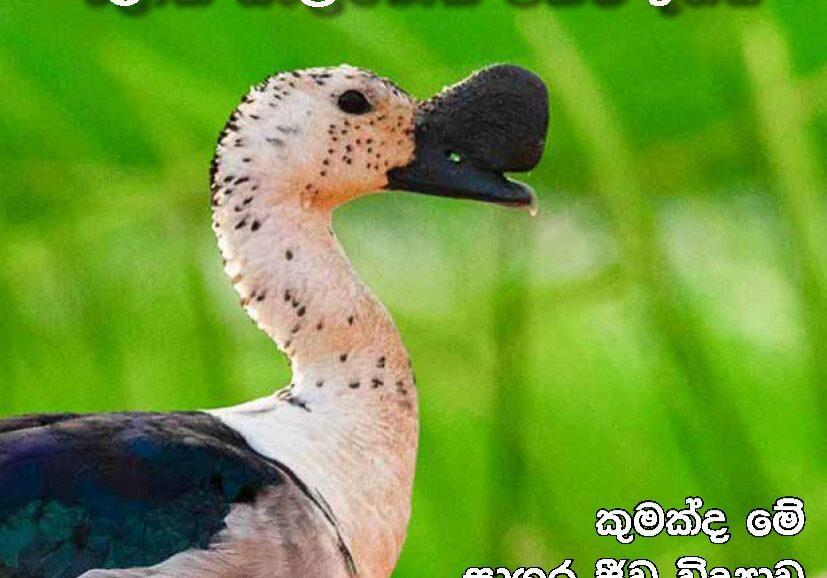Sanrakshana 06-03