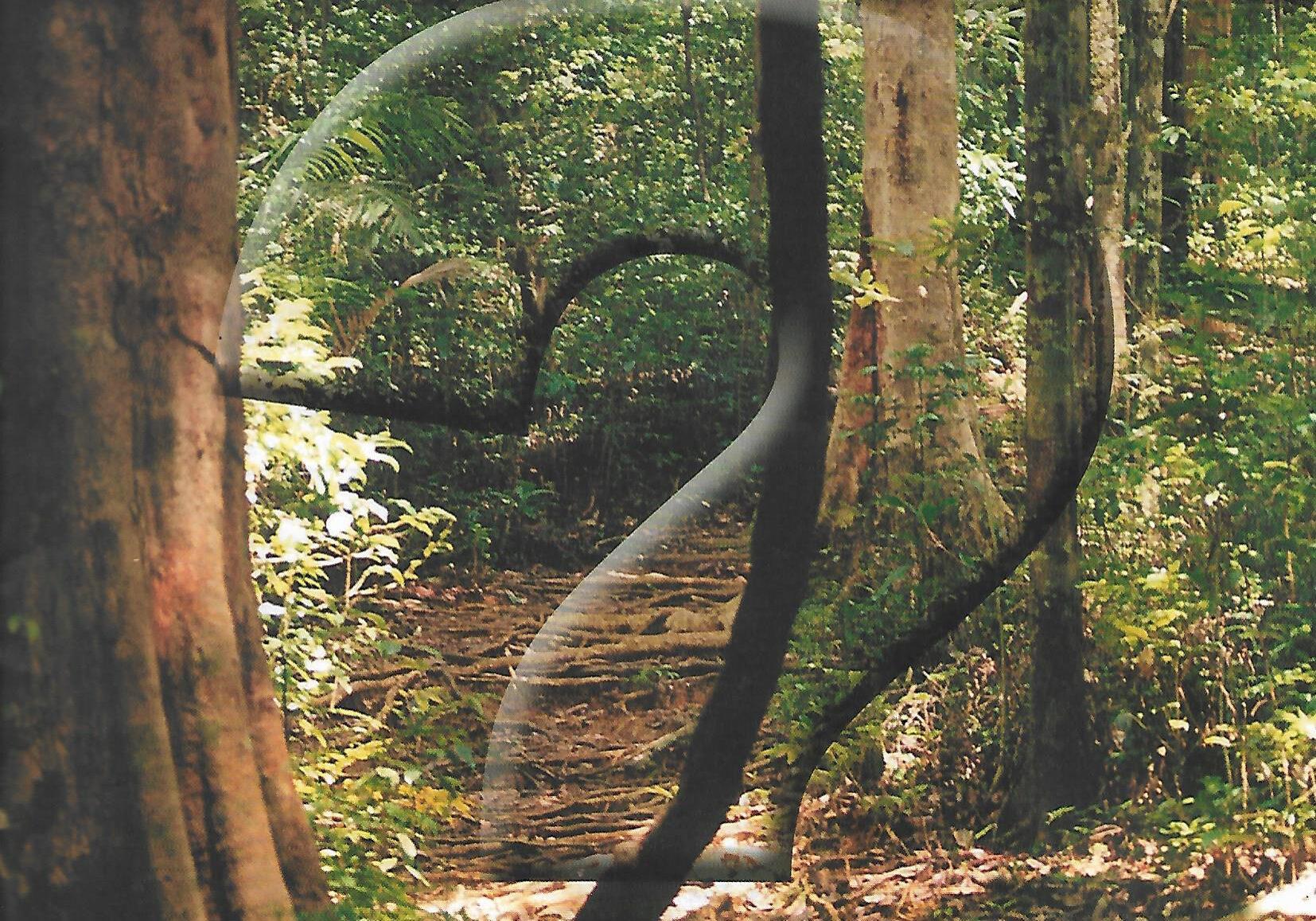 naturalist 2001 vol 4 no 2 p1