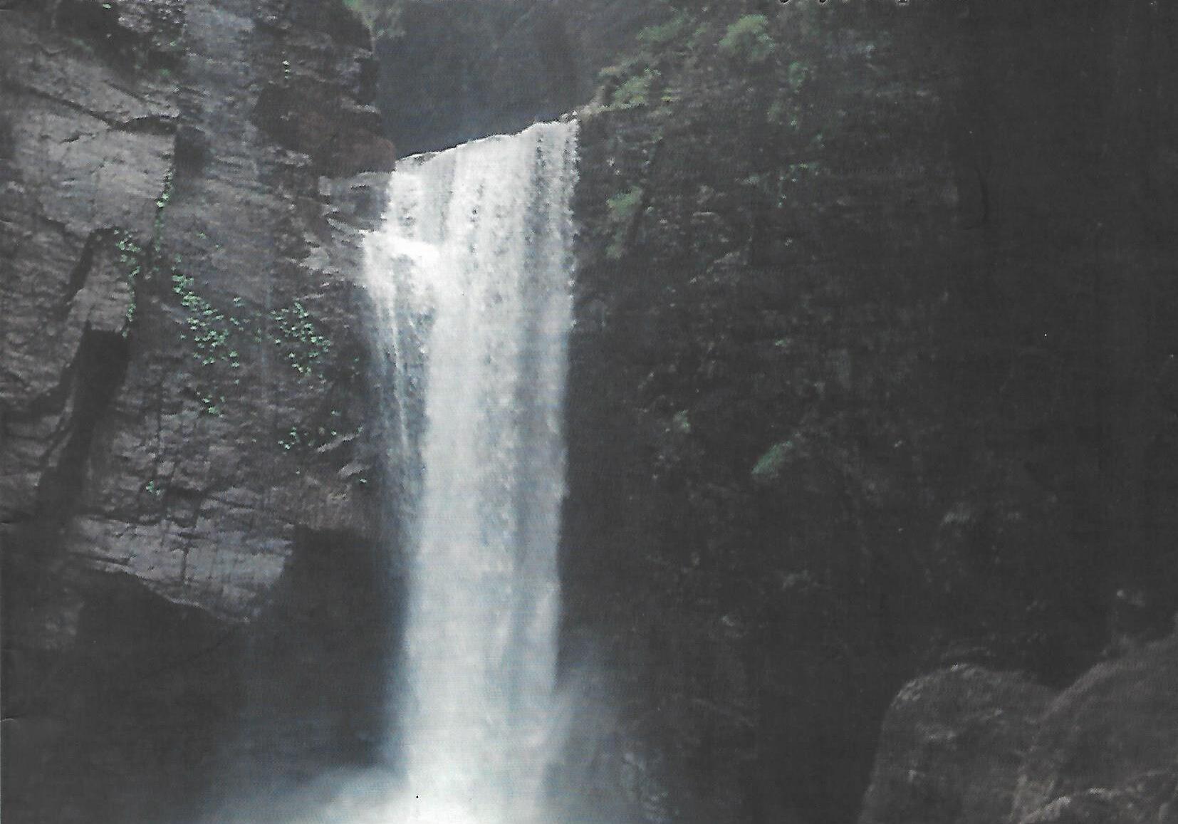 naturalist 2001 vol 4 no 3 p1