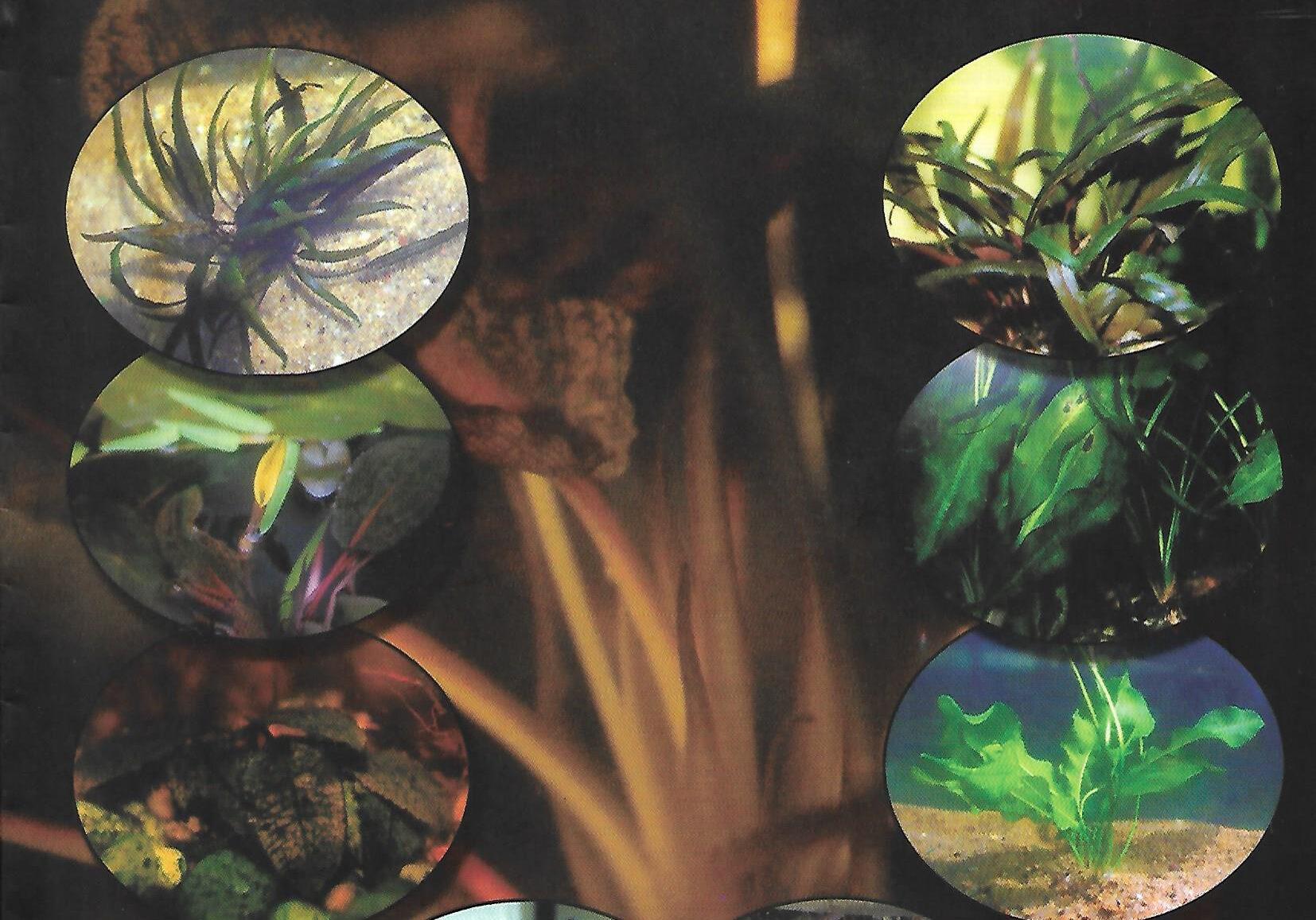 naturalist 2002 vol 5 no 2 p1