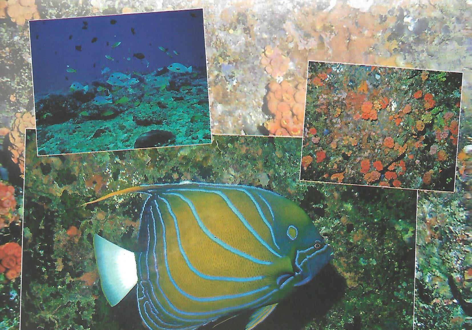 naturalist 2014 vol 7 no 3-4 p1